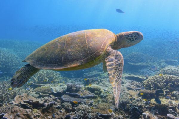 Recenze: David Attenborough: Život na naší planetě